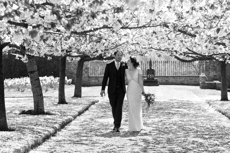 Cowdray House blossom tree